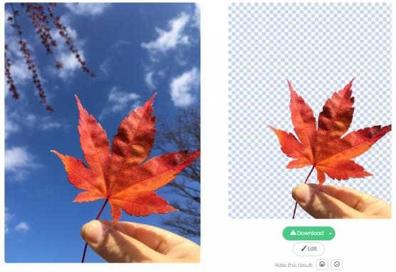 remove.bg_写真画像の背景切り抜きサンプル1
